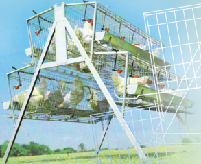 battery cages 2 tiers